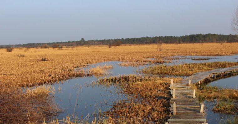 Illustration de l'article Carcans : Préserver les zones humides