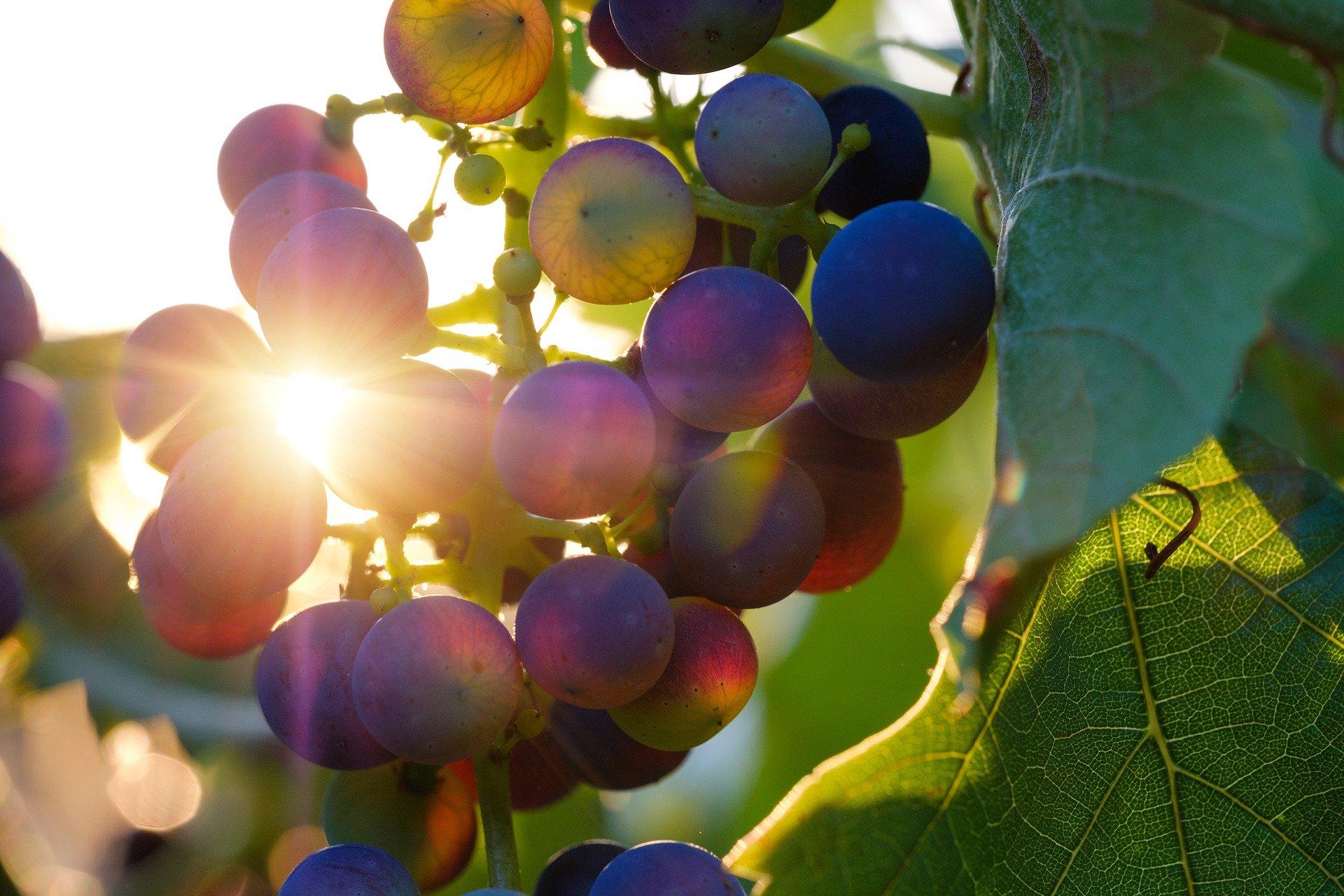 Vins de Bordeaux : des défis à relever