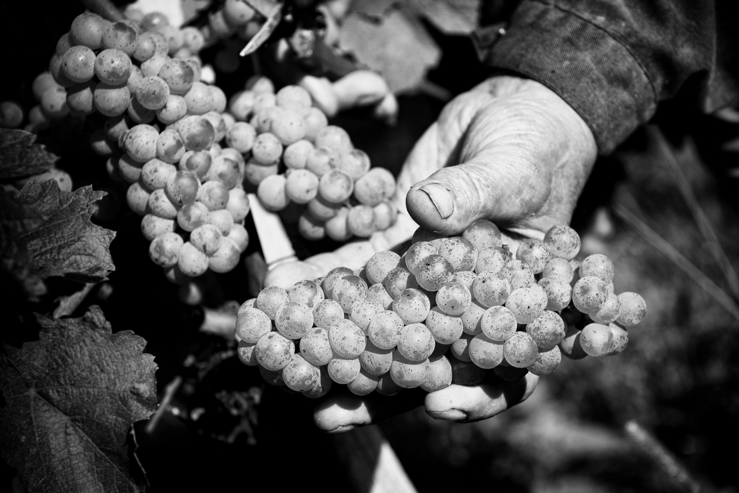 vin vignoble bordeaux