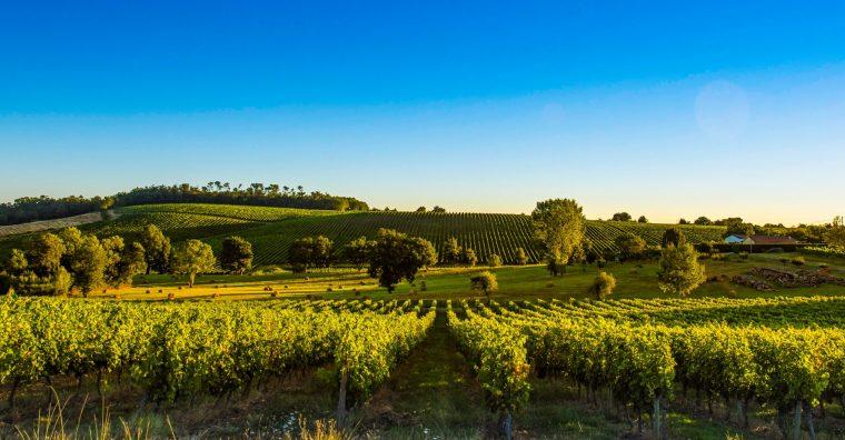 Illustration de l'article [ Gironde ] Plus verte la vigne !