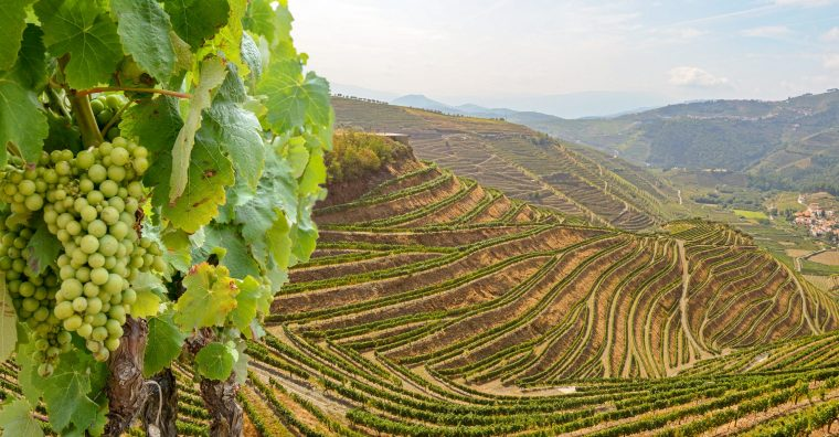 Illustration de l'article [ Tendances Vins ] La première appellation viticole d'Europe
